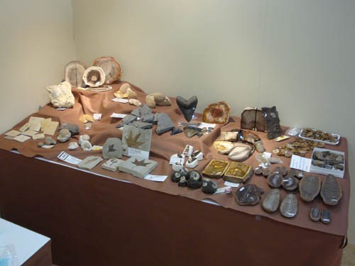 Fossil display