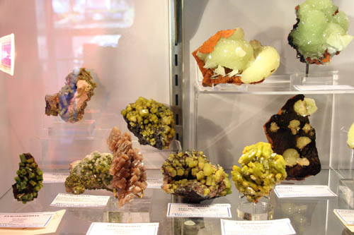 Specimens on display