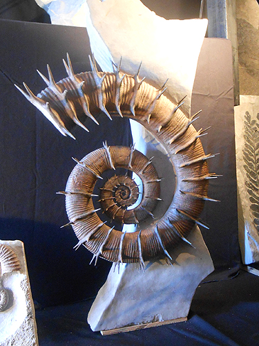 Fine ammonite preparation