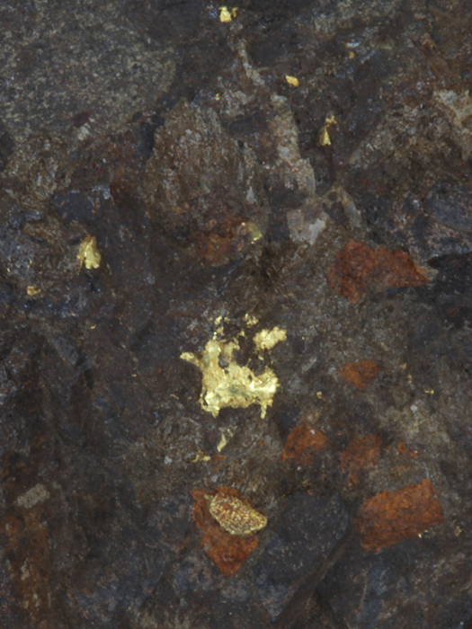 Native Gold In Goethite Replaced Calcite