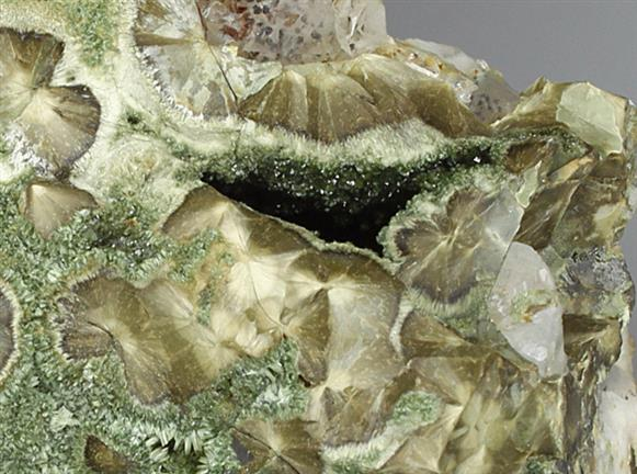 Olivenite Var Wood Copper/ Wood Olivenite