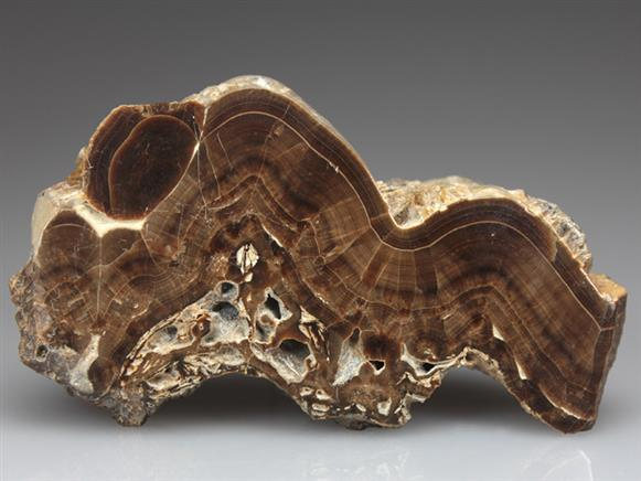 Baryte Var Oakstone Cut and Polished