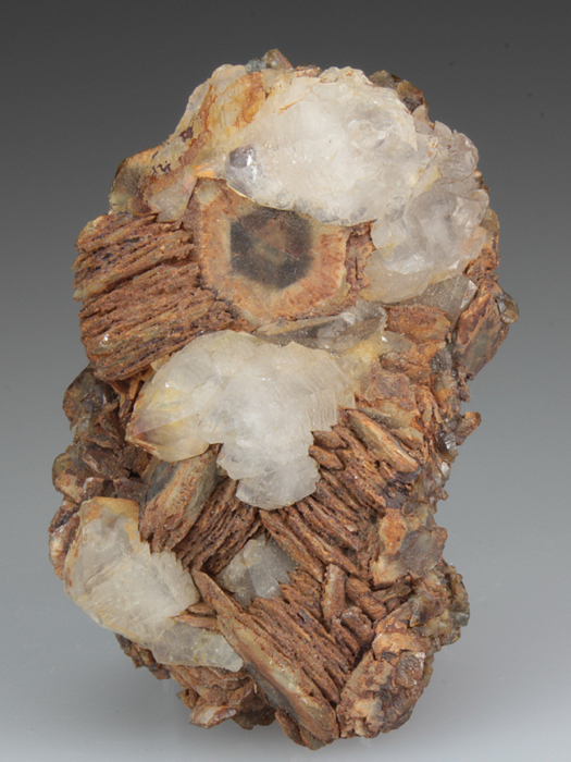 Siderite Var Horse Tooth