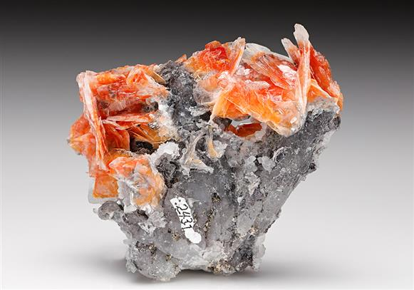 Baryte with Quartz
